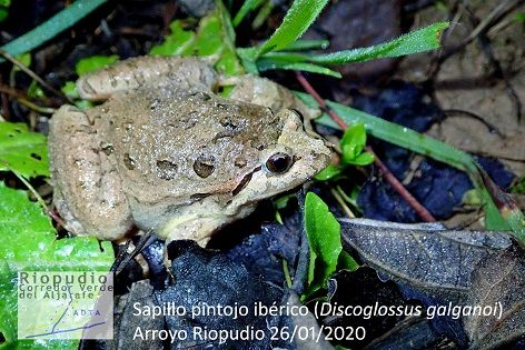 ADTA comienza a realizar un seguimiento de anfibios en el entorno del Riopudio