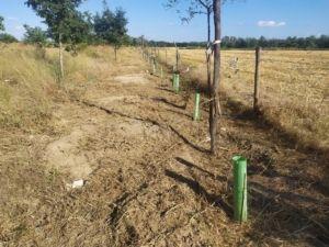 El Ayuntamiento de Coria del Río fomenta la biodiversidad en el arroyo Riopudio